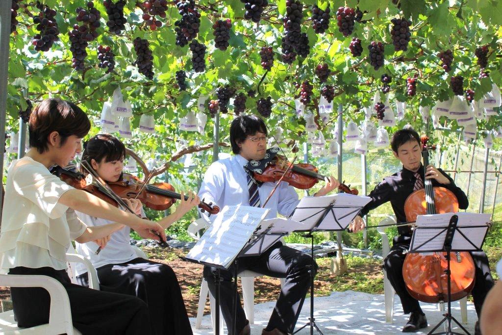 ブドウ畑で毎年開催される農園コンサート