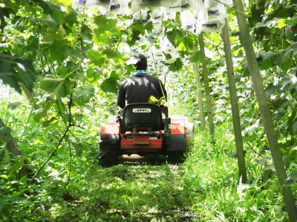 ブドウ農園を開園するまでさまざまな苦労がありました