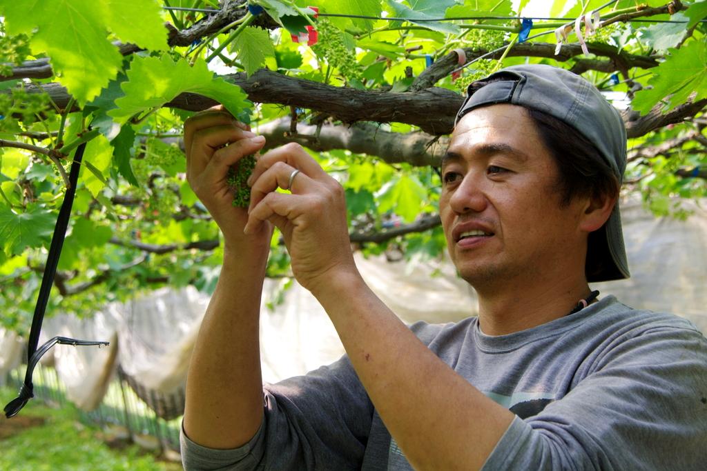父の植えた葡萄と想いを引き継いで