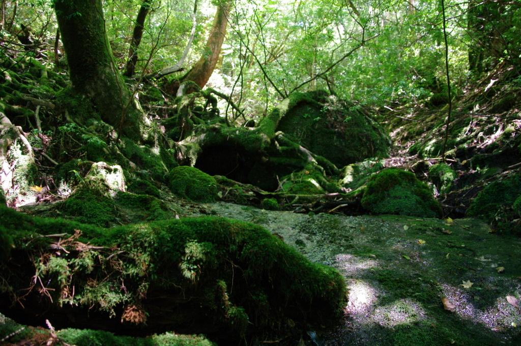 照葉樹林の森
